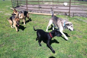 Photo #7: Natures Way Dog Training LLC Specialize in Behavioral/ Training Camp
