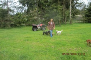 Photo #6: Natures Way Dog Training LLC Specialize in Behavioral/ Training Camp
