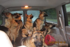 Photo #4: Natures Way Dog Training LLC Specialize in Behavioral/ Training Camp