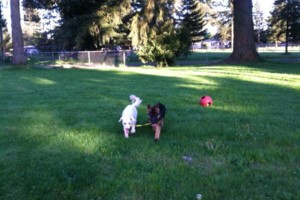 Photo #3: Natures Way Dog Training LLC Specialize in Behavioral/ Training Camp