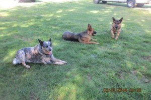 Photo #2: Natures Way Dog Training LLC Specialize in Behavioral/ Training Camp