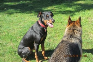 Photo #1: Natures Way Dog Training LLC Specialize in Behavioral/ Training Camp