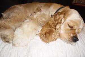 Photo #3: Dog Sitting Service $25 per night
