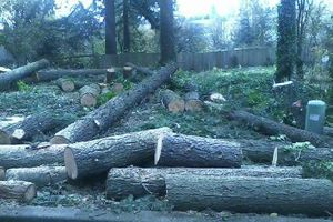 Photo #1: TREE REMOVAL & TRIMMING & STUMP GRINDING