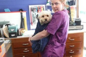 Photo #17: Self Service Dog Wash, Professional Grooming, walk in nail trims, etc.