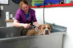 Photo #16: Self Service Dog Wash, Professional Grooming, walk in nail trims, etc.