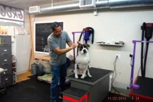 Photo #12: Self Service Dog Wash, Professional Grooming, walk in nail trims, etc.