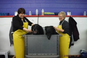 Photo #11: Self Service Dog Wash, Professional Grooming, walk in nail trims, etc.