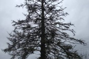 Photo #8: Zach's Residential Tree Services