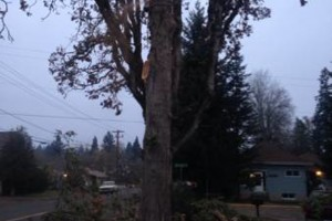 Photo #4: Zach's Residential Tree Services