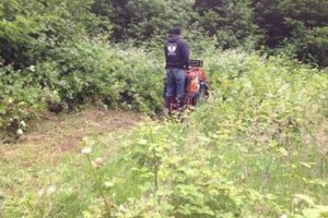 Photo #6: Field mowing, brush & blackberry removal