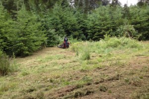 Photo #5: Field mowing, brush & blackberry removal