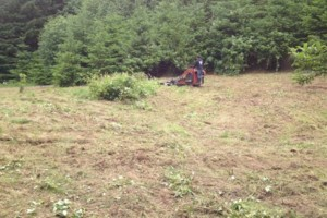 Photo #4: Field mowing, brush & blackberry removal