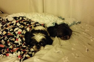Photo #14: Experienced In-Your-Home Pet Care - Daily, Weekly, Overnight