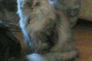 Photo #3: Experienced In-Your-Home Pet Care - Daily, Weekly, Overnight
