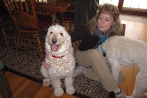 Photo #14: Quality Doggy Day Care. Insured/Bonded/References