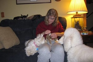Photo #12: Quality Doggy Day Care. Insured/Bonded/References