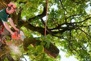 Photo #1: Reliable Tree Service. Call 24x7 EMERGENCY STORM DAMAGE