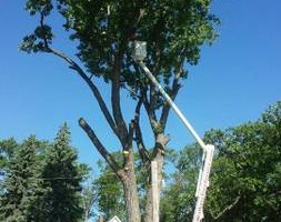 Photo #15: Limbwalkers Tree Service