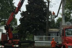 Photo #10: Limbwalkers Tree Service