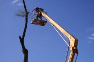Photo #1: Tree Cutting & Stump Grinding