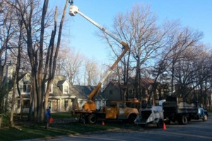 Photo #9: IRONWOOD TREE SERVICE