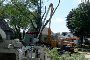 Photo #7: IRONWOOD TREE SERVICE