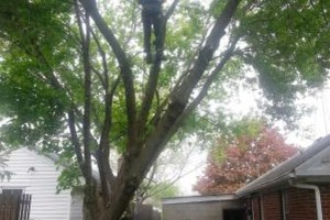 Photo #5: IRONWOOD TREE SERVICE