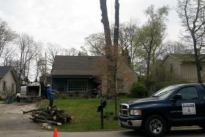 Photo #1: IRONWOOD TREE SERVICE