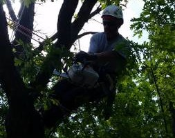 Photo #1: Top to Bottom Tree Service