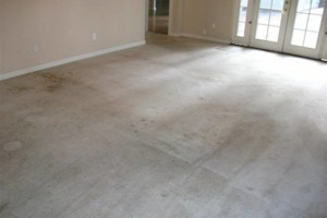 Photo #7: Professional Wonago Carpet Cleaning at Reasonable Rates!