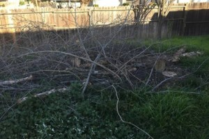 Photo #3: JDB's Custom Landscaper - Yard Clean up, Hauling, Waste Removal