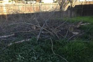 Photo #3: JDB's Custom Landscaper - Yard Clean up, Hauling, Waste Removal