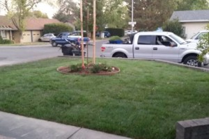 Photo #1: JDB's Custom Landscaper - Yard Clean up, Hauling, Waste Removal