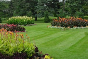 Photo #2: Lawn & Yard Services