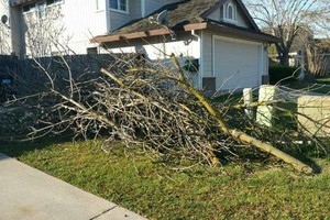 Photo #4: BIG CLEAN UPS HAULING, YARD & TREE WORK