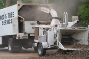 Photo #3: ROD'S TREE SERVICE - LICENSE # 679609