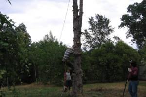 Photo #2: ROD'S TREE SERVICE - LICENSE # 679609