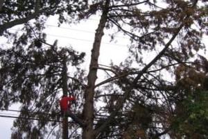 Photo #1: ROD'S TREE SERVICE - LICENSE # 679609
