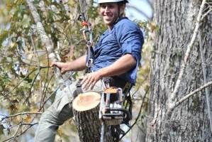 Photo #4: West Coast Tree Surgery | Certified Arborist | Reasonable Rates