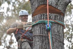 Photo #2: West Coast Tree Surgery | Certified Arborist | Reasonable Rates