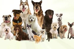 Photo #4: CANINE TRAINING SOLUTIONS