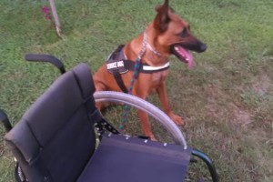 Photo #3: CANINE TRAINING SOLUTIONS