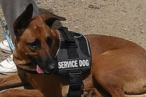 Photo #2: CANINE TRAINING SOLUTIONS