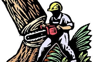 Photo #1: Tree Removal & Pruning Services (Lisenced&Insured)