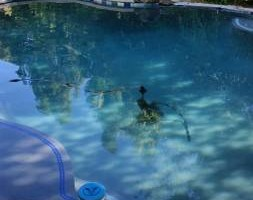 Photo #1: Cool Blue Pool Doctors. Pool Cleaning