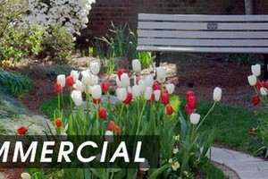 Photo #2: COMMERCIAL LANDSCAPING / LAWN CARE