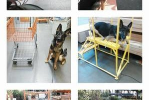 Photo #6: Alpha K9. A-List Dog Training