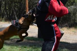 Photo #5: Alpha K9. A-List Dog Training