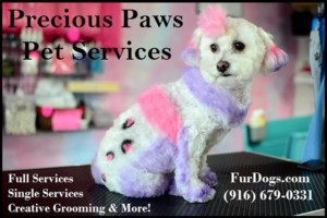 Photo #1: Precious Paws Pet Services - Dog Grooming